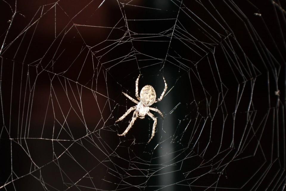 praga-aranhas